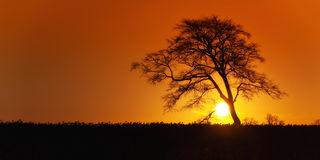 sunrise-lone-tree-silhouette-27030281